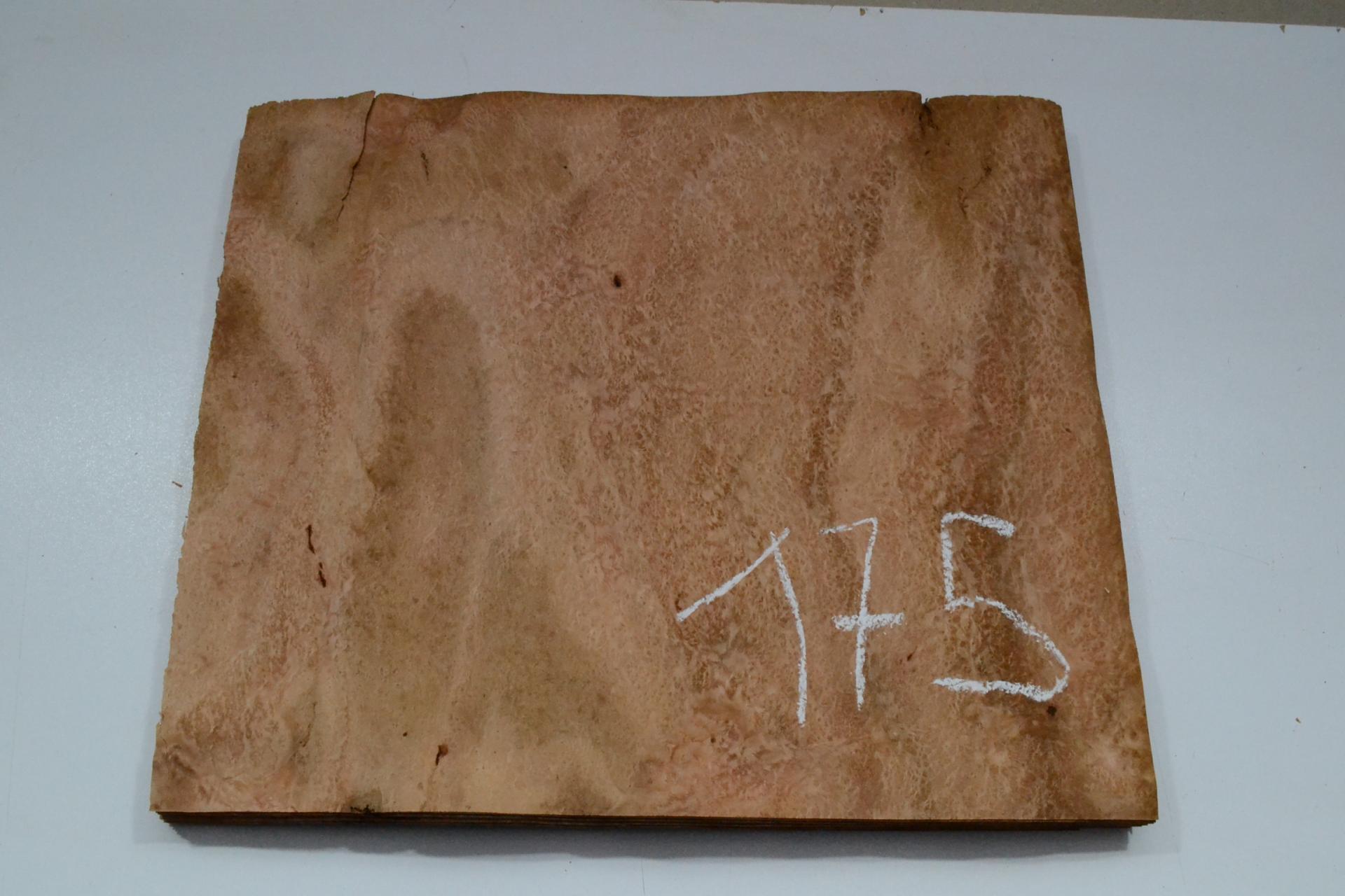 175 loupe d eualyptus marqueterie feuille de bois marqueterie 1