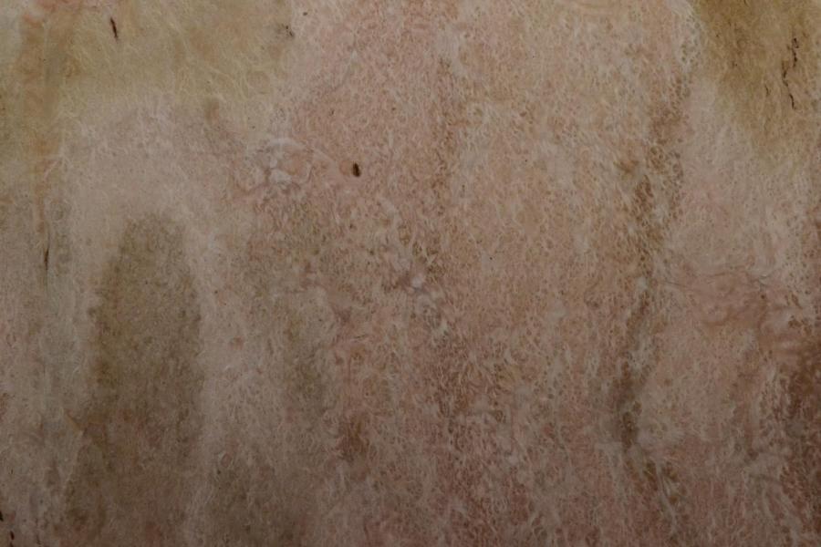 175 loupe d eualyptus marqueterie feuille de bois marqueterie 3