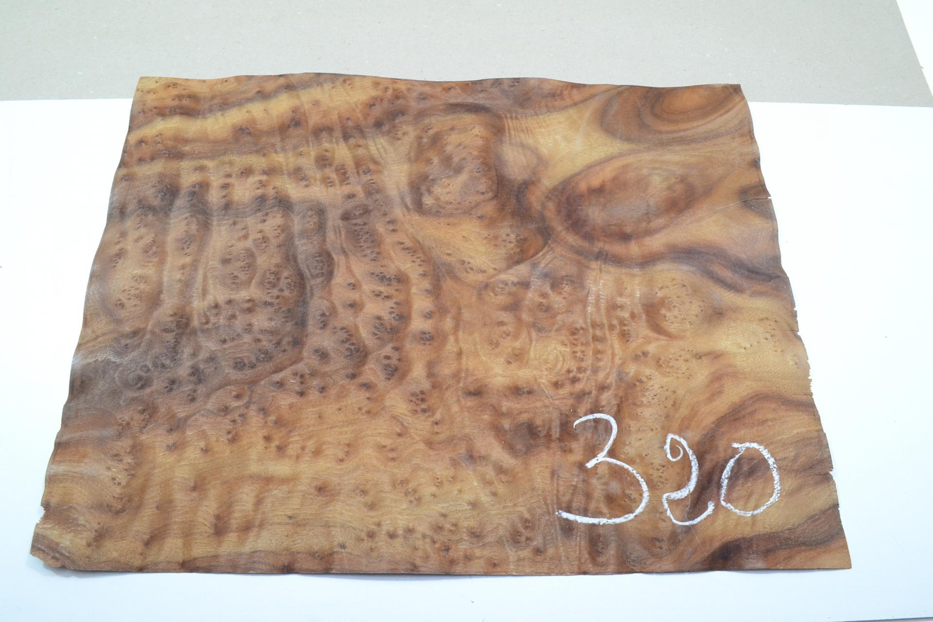 320 placage marqueterie loupe de camphrier 1