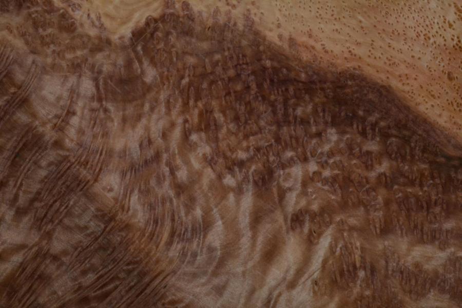 433 placage marqueterie loupe de sequoia vavona 4